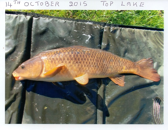 Ted_October_Carp